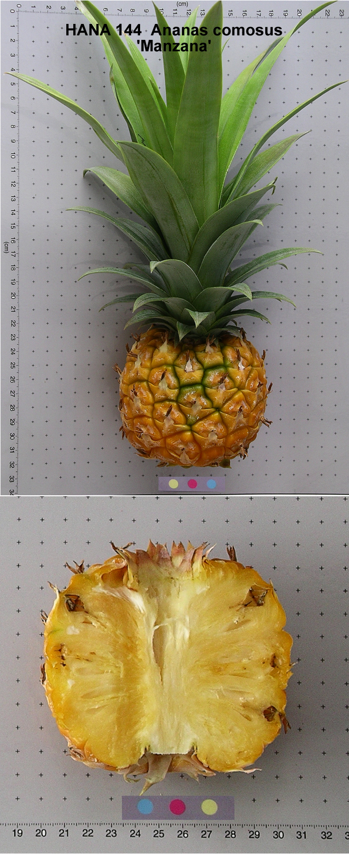 pineapple ananas comosus skin extract essay Pineapple as stain remover essay sample pineapple (ananas comosus) is a fruit which was classified as a ripe and unripe this was usually grown in a place where temperature and the weather are cold.